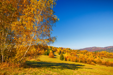 Photo for Landscape with a trees in autumn colors, Slovakia, Europe. - Royalty Free Image