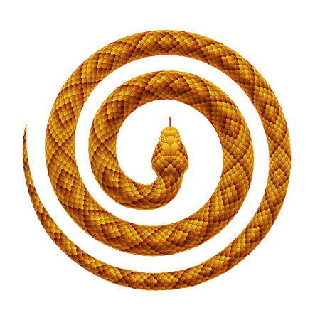 Illustration pour Vector realistic illustration of a tropical snake curled into a spiral shape. Serpent coiled with a head in the center, isolated on a white background. - image libre de droit
