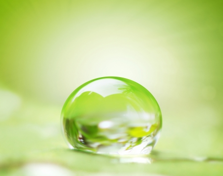 Photo for green leaf and water drop on it shallow dof  - Royalty Free Image