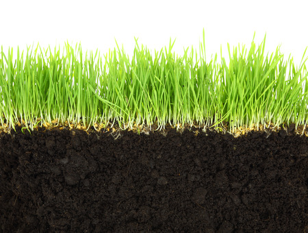 Photo for Cross-section of soil and grass isolated on white background  - Royalty Free Image