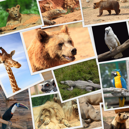 Collection of wild animals photography