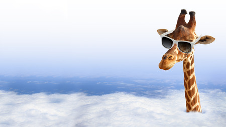 Photo pour Funny giraffe with sunglasses coming out of the clouds - image libre de droit