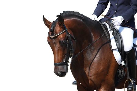 Photo pour Bay horse portrait during dressage competition isolated on white - image libre de droit