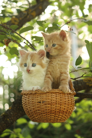 Two kittens sitting in the basket hanging on the tree branch