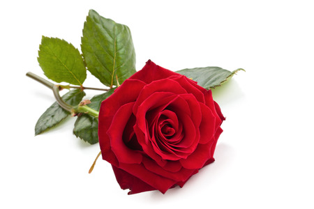 Photo pour Red rose isolated on white background. - image libre de droit