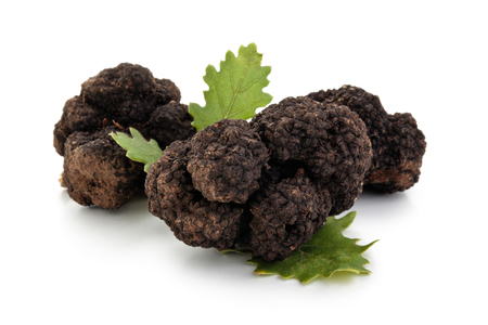 Photo for Closeup shot of black truffles and oak leaves isolated on white background. - Royalty Free Image