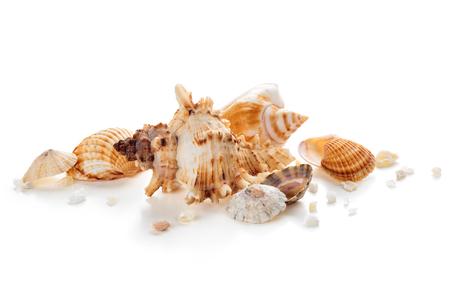 Photo pour Shells in a row. - image libre de droit