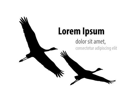 Illustration pour Demoiselle crane in flight silhouette. Template design for banner, t-shirt, cover. - image libre de droit