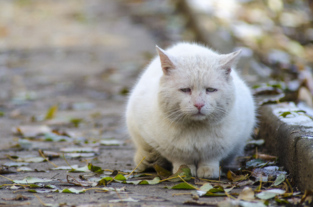 Foto de sad street homeless cat - Imagen libre de derechos