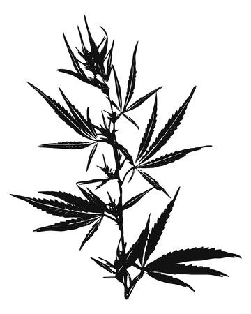 Illustration pour Vector illustration of Marijuana Leaves, Cannabis - image libre de droit
