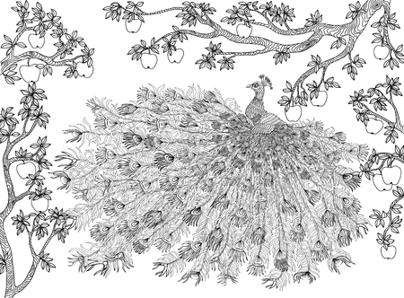 Illustration for Hand drawn bird - Peacock on a branch apple-tree. Coloring page. - Royalty Free Image