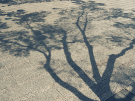 Photo pour Tree Branches shadow on cement Nature Abstract background - image libre de droit