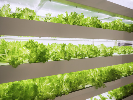Foto de Greenhouse Plant row Grow with LED Light Indoor Farm Agriculture Technology - Imagen libre de derechos
