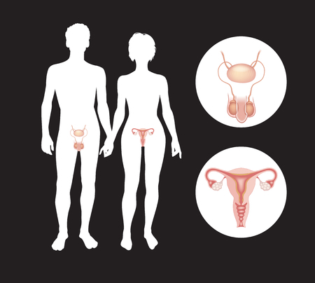 Illustration pour The male and female reproductive systems. Silhouettes of men and women with sexual organs. This work - eps10 vector file,  - image libre de droit
