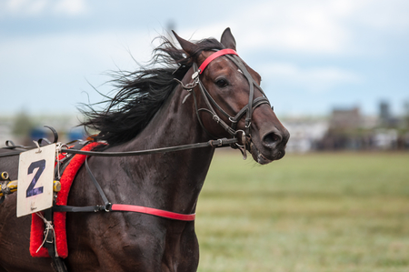 Photo pour Horse racing is a type of testing horses on playfulness (speed), which concludes on the suitability for further breeding (use the breed) - image libre de droit