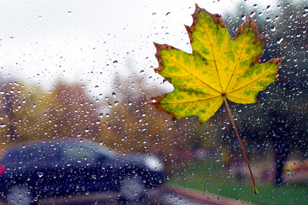 yellow leaf on the car glass