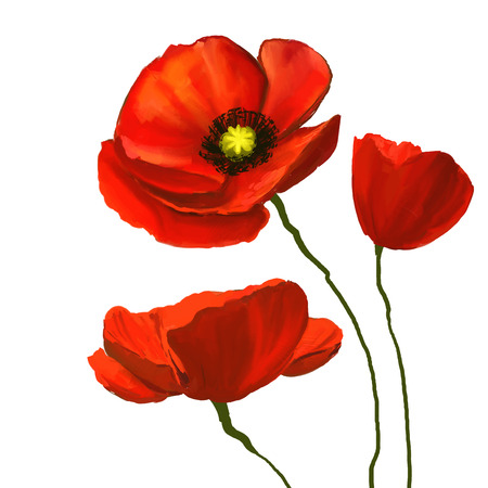 Ilustración de poppies vector illustration  hand drawn  painted watercolor - Imagen libre de derechos