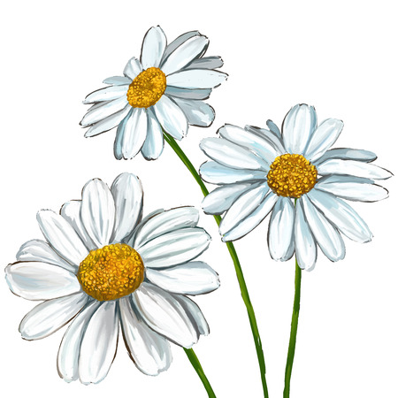 Illustration pour daisy vector illustration  hand drawn  painted watercolor - image libre de droit