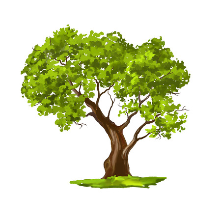 Illustration for Tree vector illustration  hand drawn  painted watercolor - Royalty Free Image