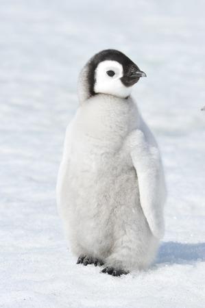 Foto de Snow Hill October 14 to 26, Antarctica 2010 on icebreaker Kapitan Khlebnikov - Imagen libre de derechos