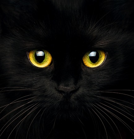 Photo for Cute muzzle of a black cat closeup - Royalty Free Image