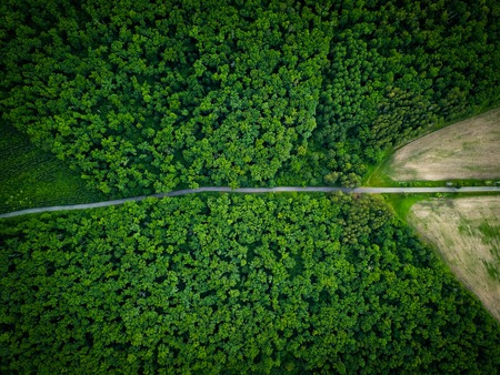 Foto de Road through the forest, view from height - aerial view - Imagen libre de derechos