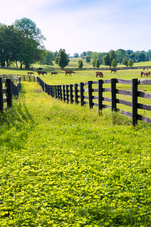 Photo pour Horses at horse farm. Country landscape. - image libre de droit