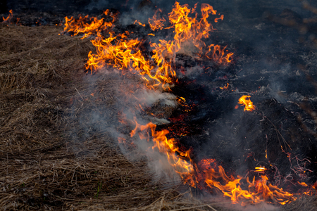 Photo for A strong fire spreads in gusts of wind through dry grass, smoking dry grass, concept of fire and burning of the forest. - Royalty Free Image