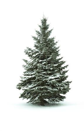 Foto de Christmas Tree - Isolated over White background - Imagen libre de derechos