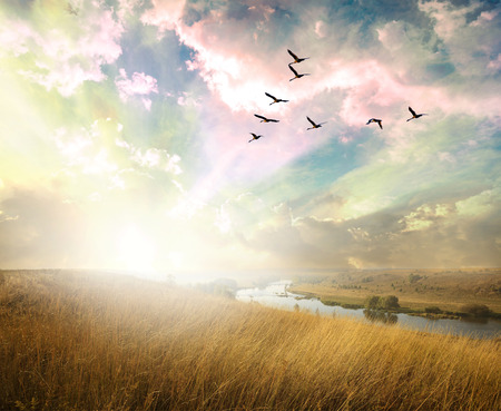 Foto per Green field of grass and flying birds - Immagine Royalty Free