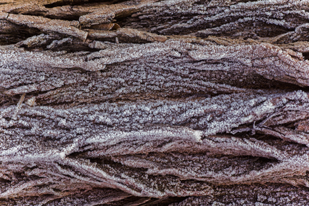 Photo for The bark of the plant tree is covered with ice crystals. Dead on the trees. First frosts. Cold season. Fall cold. Natural background. - Royalty Free Image