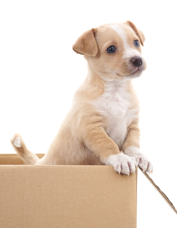 Foto de Brown puppy in a box isolated on white background. - Imagen libre de derechos