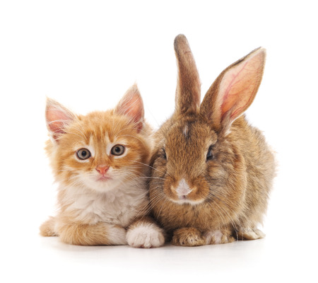 Photo for Red kitty and bunny on a white background. - Royalty Free Image