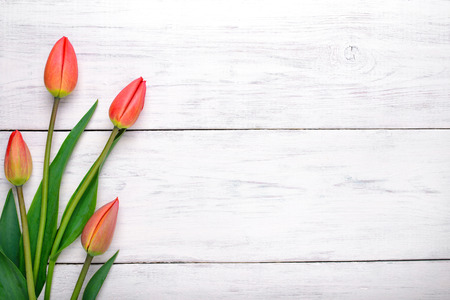 Photo for Red tulips flowers on white wooden table. Top view with copy space - Royalty Free Image