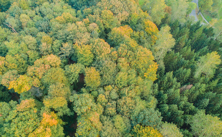 Photo for Aerial view of a mixed forest - Royalty Free Image