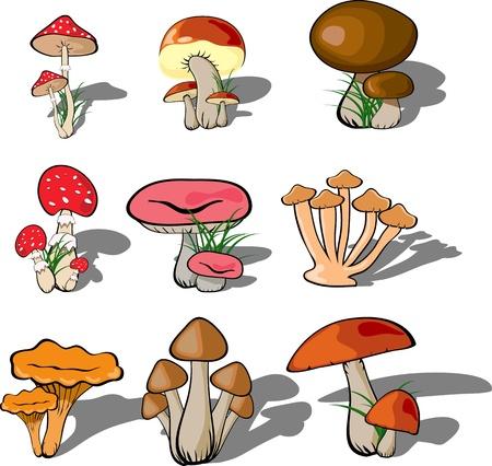 mushroom forest set vector