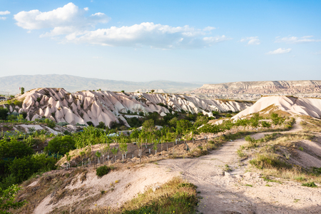 Foto de Travel to Turkey - little orchard near Uchisar village in Cappadocia in spring - Imagen libre de derechos