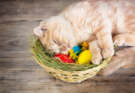 Little cream cat sleeping on the basket with colored eggs