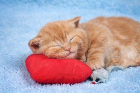 Little cat sleeping on the red heart-shaped pillow