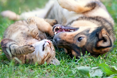 Photo for Dog and cat playing together outdoor - Royalty Free Image