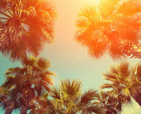 Photo for Palm trees against sky at sunset - Royalty Free Image