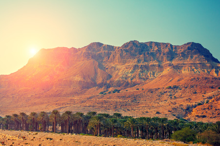 Photo for Judean desert in Israel at sunset - Royalty Free Image