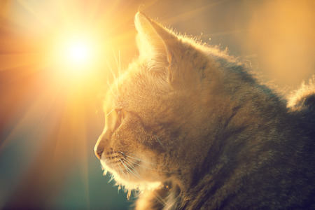 Photo for Silhouette of a cat lying outdoor against the sun. - Royalty Free Image