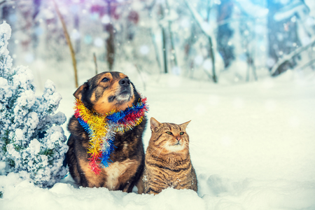 Photo for Dog and cat sitting together outdoor in the snowy forest near fir tree. Christmas concept - Royalty Free Image