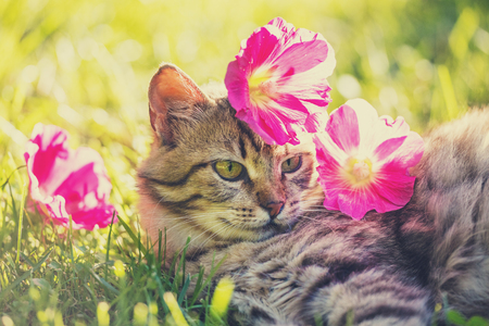 Photo pour Cat lying on the grass in the garden in summer with flowers on the head - image libre de droit