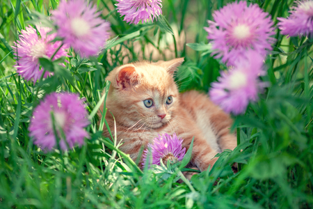 Foto de Cute little red kitten sitting in flowers on the grass - Imagen libre de derechos