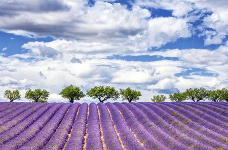 Foto de View of lavender field, France, Europe - Imagen libre de derechos