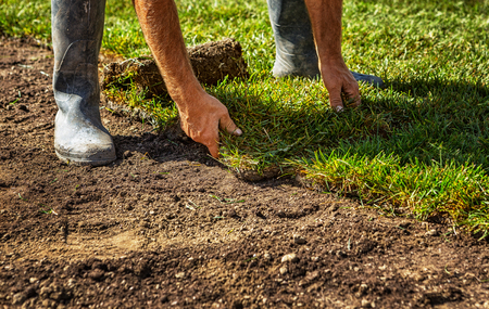 Photo for Unrolling grass turf rolls for a new lawn - Royalty Free Image