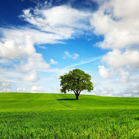 Photo pour My green planet - image libre de droit