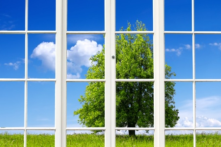 Ecology Window